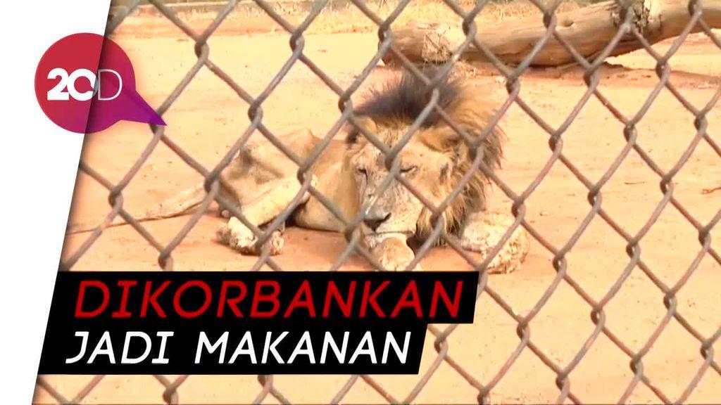 Tragisnya Kondisi Hewan di Kebun Binatang Venezuela