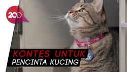 Yuk, Ikuti Aceh International Cat Show 2018!