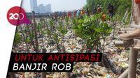Selain Dikeruk, Sampah di Angke Juga Ditanami Mangrove