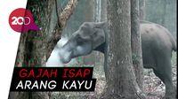 Ada Gajah Merokok di India, Ini Penjelasannya