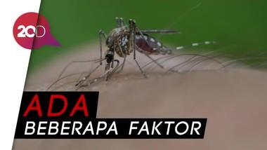 Sering Bentol Digigit Nyamuk? Mungkin Ini Alasannya