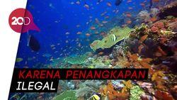 Dunia Bawah Laut Pulau Komodo yang Memprihatinkan