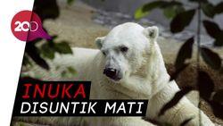 Singapura Berduka atas Matinya Beruang Kutub