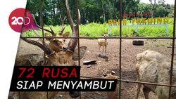 Yuk Berwisata sambil Belajar Mengenal Rusa di Hutan Maliran!