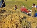Arrahmah di Antara Keterpurukan Petani dan Harapan Jokowi