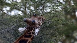 Hotel 'Sarang Burung' Dekatkan Tamu dengan Alam Afrika
