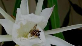 Studi Ungkap Ada Kontaminasi Pestisida di Dalam Madu