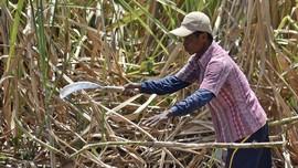 Pemerintah Dinilai Acuhkan Protes Petani soal Polemik Gula