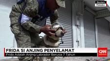 Frida Si Anjing Penyelamat Korban Gempa