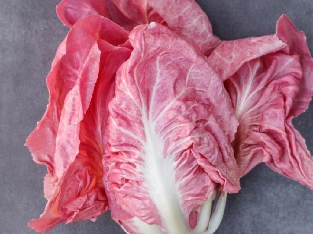 Lettuce Pink Cantik dari Italia Ini Akan Jadi Tren Makanan Terbaru di Instagram
