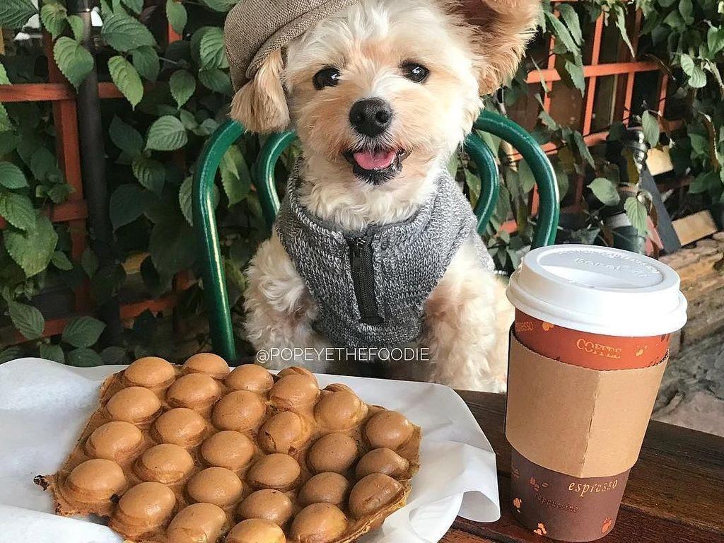 Gemasnya! Anjing 'Popeye' yang Berpose Sebagai Food Blogger Hits