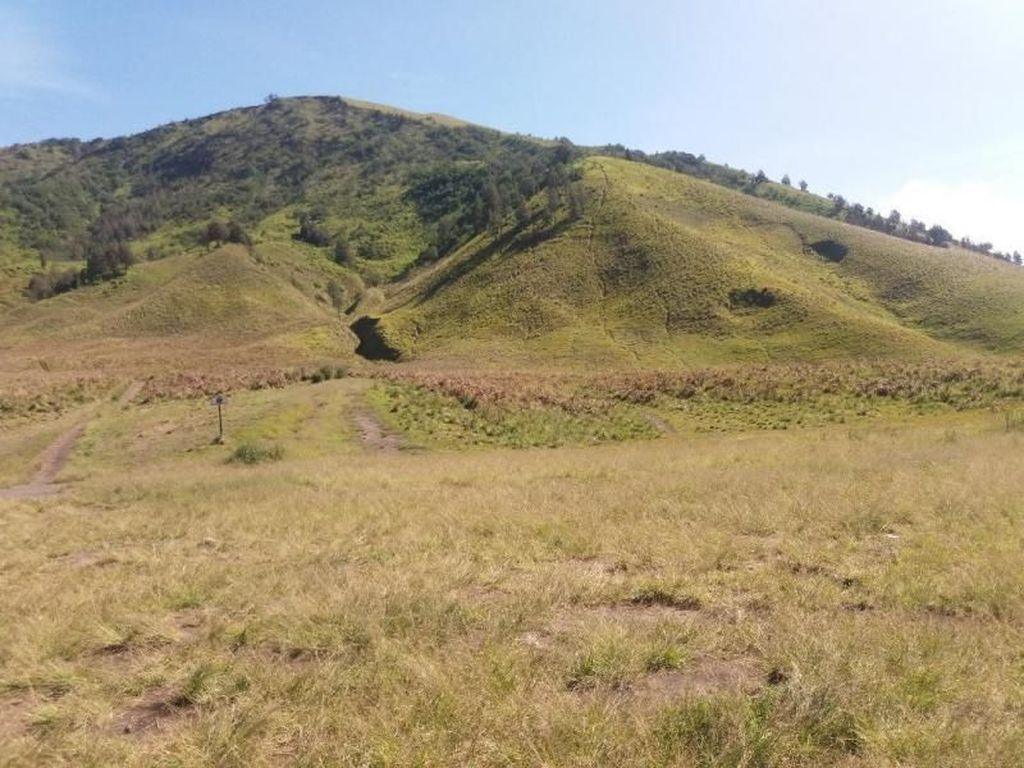 Cantiknya Bukit Teletubbies Bromo Bikin Rindu