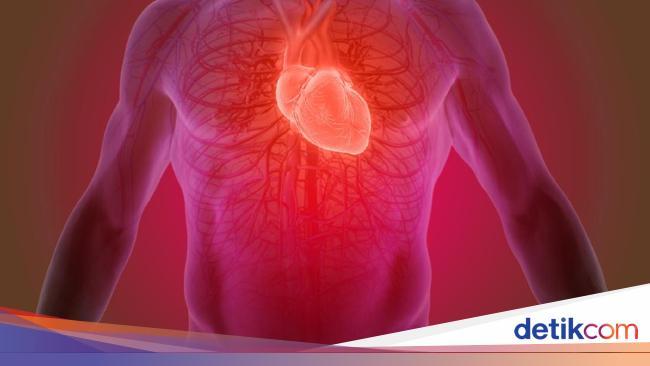 Mengenal Anatomi Jantung Dan Cara Kerjanya