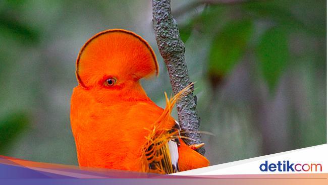 60 Koleksi Tebak Gambar Burung Cendrawasih Dan Sepeda Terbaru
