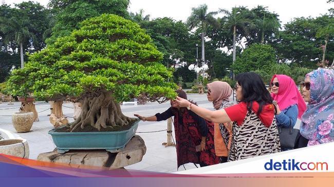 Wow Ada Bonsai Seharga Rp 1 Miliar Sedang Dipamerkan Di Surabaya