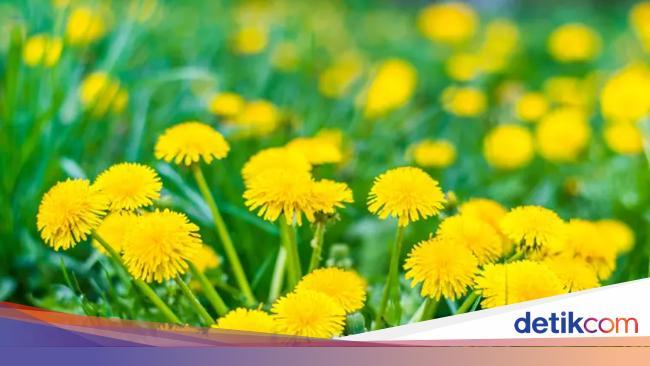 Tampilannya Cantik 10 Bunga Dan Tumbuhan Cantik Ini Bisa Dimakan