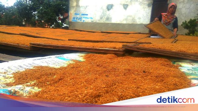 Hasil Tembakau Tak Maksimal Akibat Cuaca Buruk