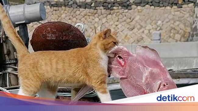 Gemes Banget Penguin Hingga Kucing Ini Suka Beli Makanan Sendiri