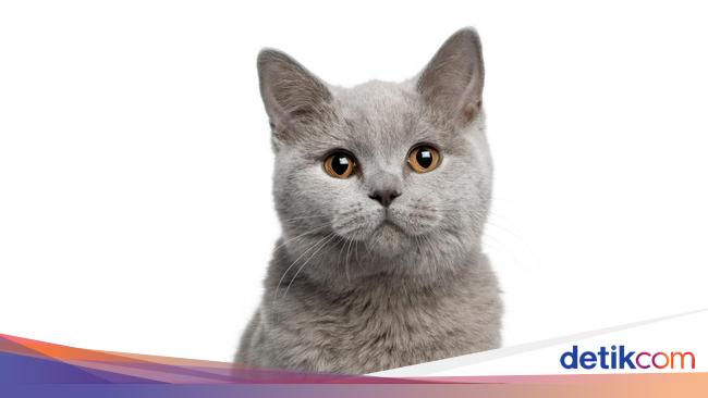 8 Tips Merawat Kucing Saat Pandemi Virus Corona