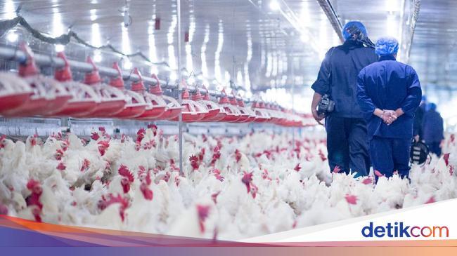 9 Lapor ke WHO, Kasus Pertama Flu Burung H5N8 pada