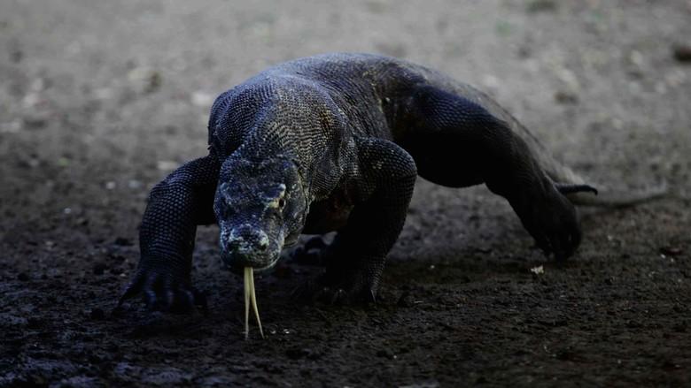 Wisatawan menikmati keindahan alam Taman Nasional Komodo dari atas bukit Gili laba, Labuan Bajo, Flores, Beberapa waktu lalu. Taman nasional komodo yang telah terpilih menjadi new 7 wonder selain menyajikan alam yang sangat indah juga memiliki hewan khas komodo yang mendiami Pulau rinca dan Pulau Komodo.