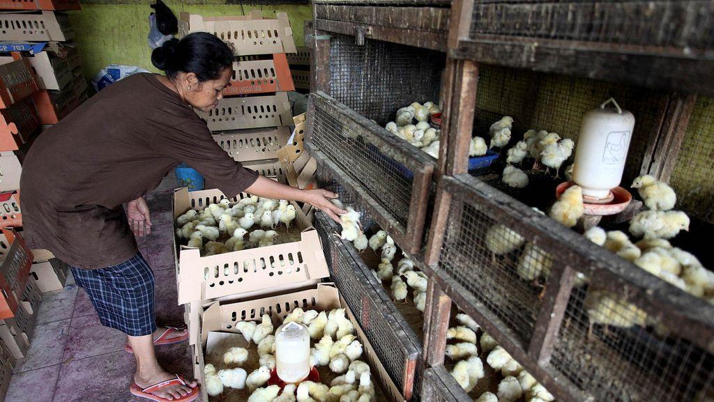 Kementan Minta Pengusaha Besar Cabut dari Pasar Tradisional