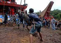 Pesona Tana Toraja: Alamnya Indah, Kebudayaannya Kaya