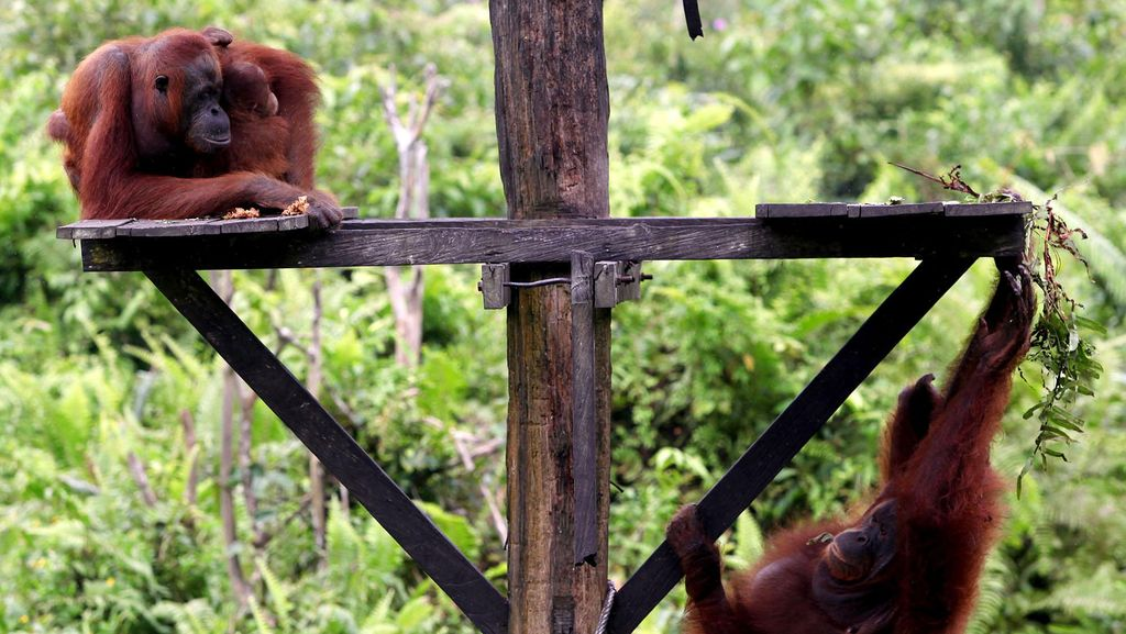 Satgas STL Amankan 53 Satwa Liar di Riau