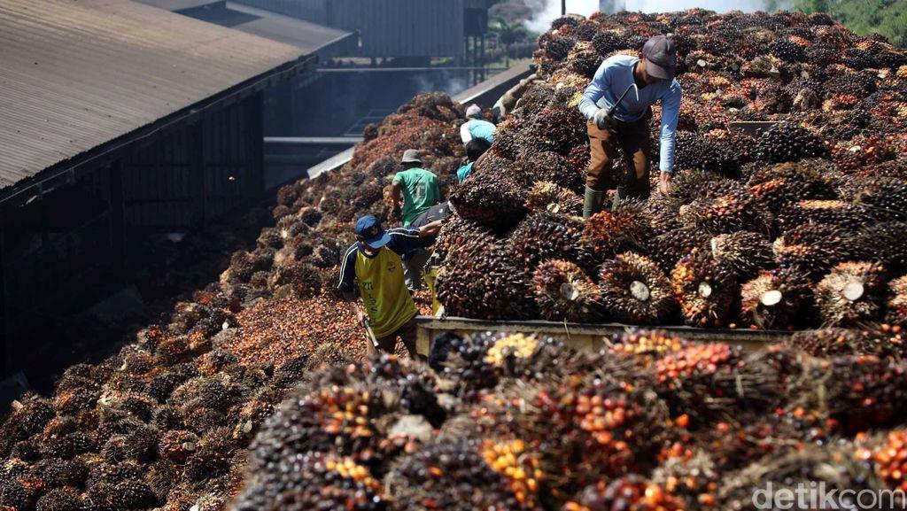 China Pengimpor Sawit RI Ketiga Terbesar Dunia