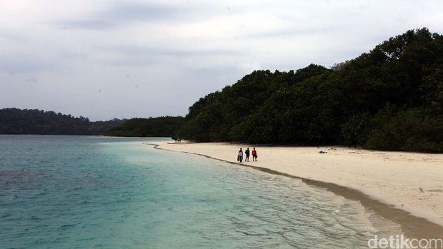 Satwa Liar di Pulau Peuncang, Taman Nasional Ujung Kulon, Banten. Taman Nasional Ujung Kulon terletak di bagian paling barat Pulau Jawa, Indonesia. Kawasan Taman nasional ini juga memasukan wilayah Krakatau dan beberapa pulau kecil disekitarnya seperti Pulau Handeuleum dan Pulau Peucang. File/detikFoto