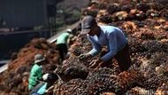 Sawit hingga Kopi RI Tak Lagi Dikenakan Tarif Masuk Chili
