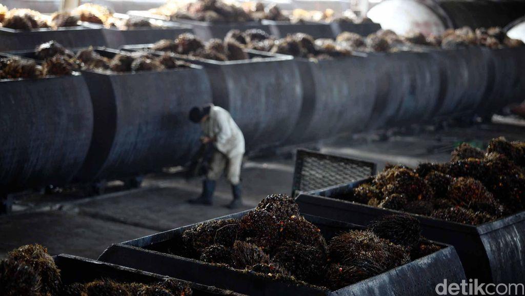 Sawit Aceh 4.900 Metrik Ton Diekspor Perdana ke India