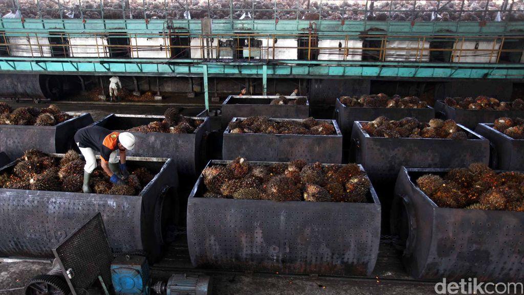 Limbah Sawit Diolah Jadi Listrik Berkapasitas 700 Kw