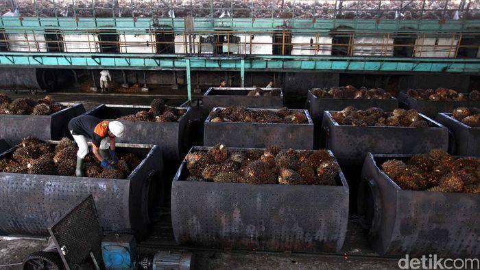 Foto: Ilustrasi Pabrik Minyak Goreng (Jhoni Hutapea/Detik)