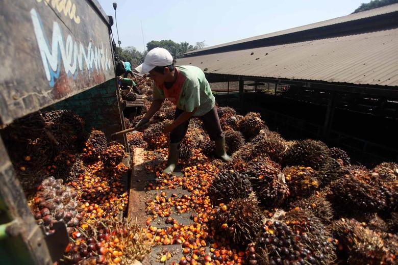 Pabrik Minyak Kelapa Sawit di Banten. Foto: Jhoni Hutapea