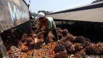 Brasil Punya BBM Ethanol, Indonesia Ingin Terapkan Biodiesel 100