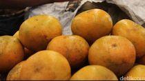 Peneliti Farmasi UGM Ungkap Potensi Jeruk untuk Tangkal Corona