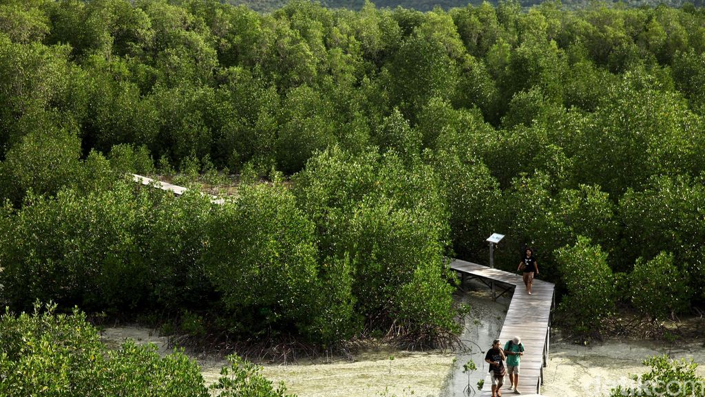 Prabowo Mau Ubah 60 Juta Hektar Hutan Jadi Kebun Aren hingga Sengon