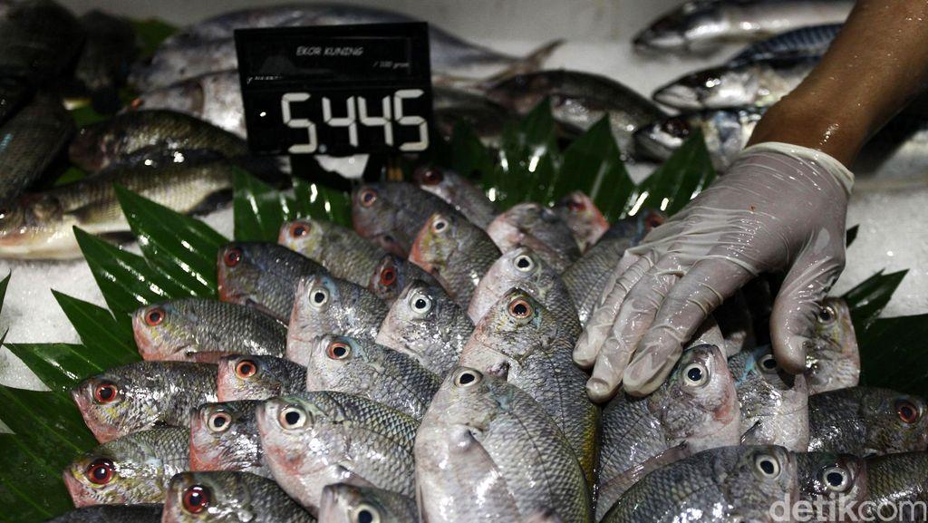 Duh, Ekspor Ikan RI Kalah dari Vietnam