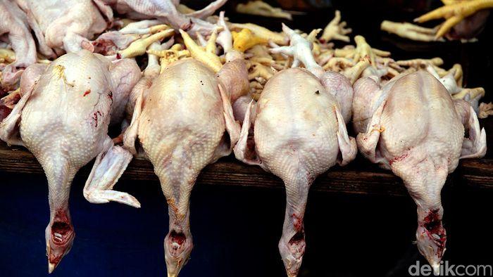 Ilustrasi daging ayam/Foto: rengga sancaya