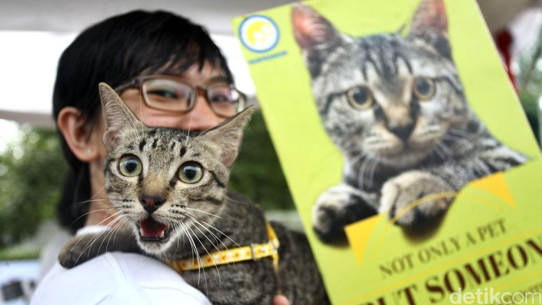 Seorang penggemar kucing berpose dengan hewan kesayangannya pada perayaan World Stray Animal Day di Bumi Perkemahan Ragunan, Jakarta Selatan, Sabtu (04/04/2015). Acara tersebut mengkampanyekan tindakan adopsi hewan peliharaan seperti kucing dan anjing yang terlantar, dari pada harus membelinya sebagai salah satu upaya mengendalikan populasi anjing dan kucing.