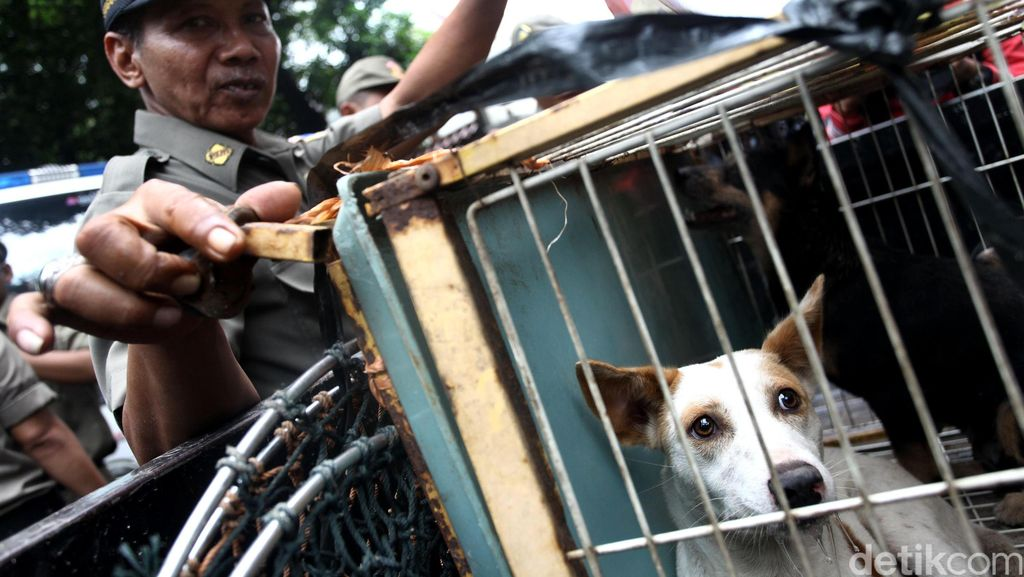 Anjing Suspek Rabies Lepas, Pemkab Bengkulu Tengah Minta Warga Waspada