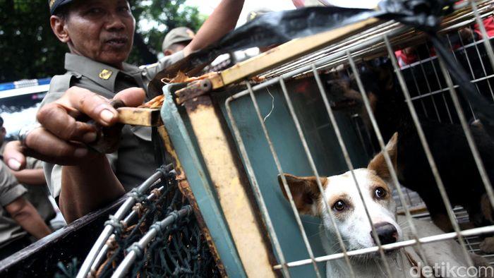 Razia Anjing dan Kucing Liar Cegah Rabies/Foto: Grandyos Zafna