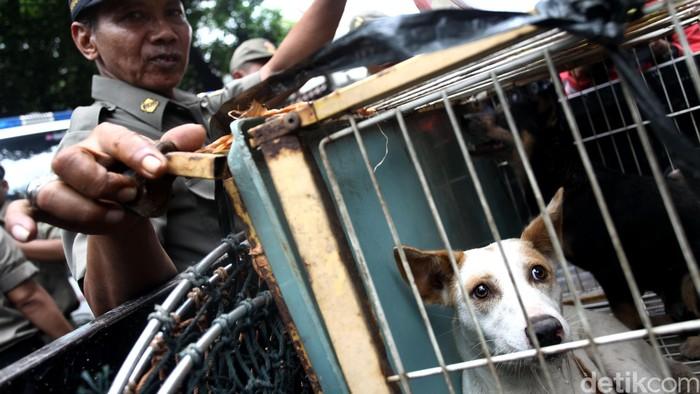 Suku Dinas Kelautan Pertanian dan Ketahanan Pangan bersama Satpol PP Jakarta Pusat melakukan razia anjing dan kucing liar di Jalan Latuharhary, Jakarta, Kamis (9/4). Razia ini dilakukan untuk meminimalisir melebarnya virus rabies. Razia ini terhadap para pedagang anjing dan kucing.