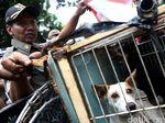 14 Orang Positif Rabies, Kabupaten Bima Tetapkan Status KLB