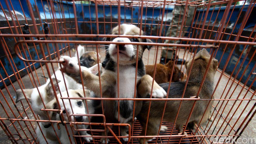5 Fakta Rabies, Penyakit yang Ditularkan Gigitan Anjing