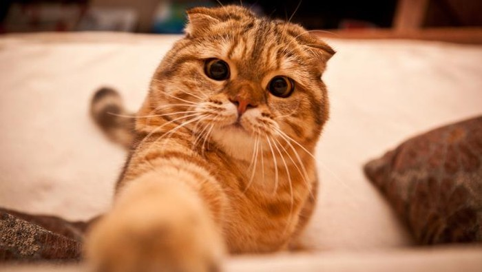 Ilustrasi seekor kucing