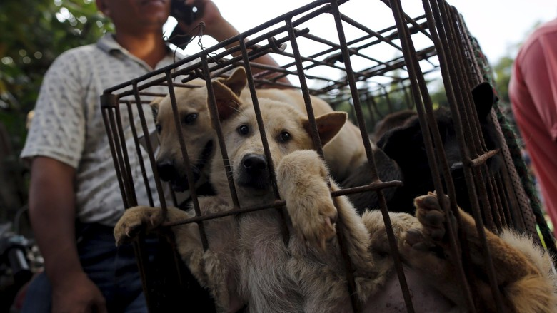 Bupati Karanganyar Akan Tutup Semua Warung Makan Daging Anjing