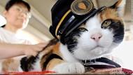 Tama, Kucing yang Jadi Kepala Stasiun Mati karena Gagal Jantung