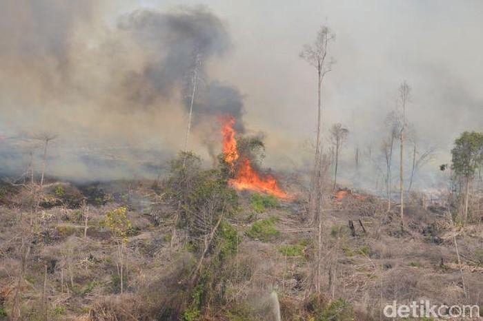Kebakaran hutan di Bengkalis, Riau Februari 2015
